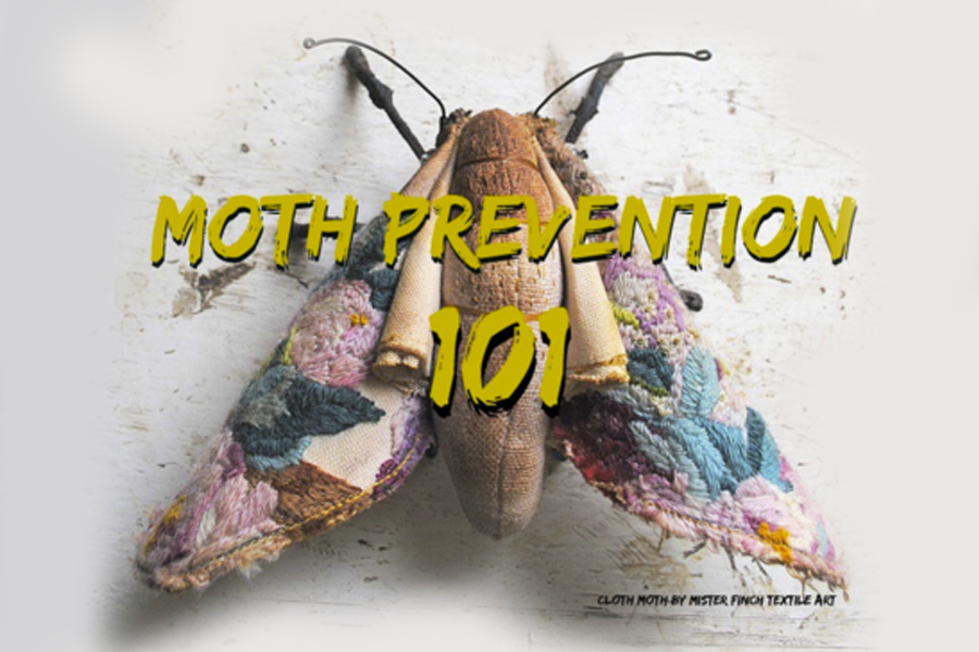 Moth Prevention 101 scarlet chamberlin styling co